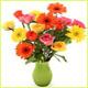 فرح الزهور's صورة