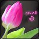 أم أحمد_**'s صورة